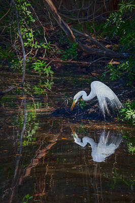 Egret Photograph - Pause For Reflection by Rob Travis