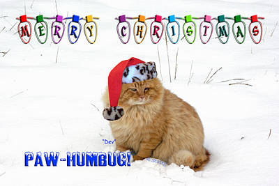 Photograph - Paw Humbug by Robyn Stacey