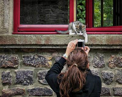 Photograph - Paw-parazzi - Kitten by Nikolyn McDonald