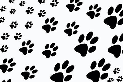 Digital Art - Paw Prints by Jennifer Muller