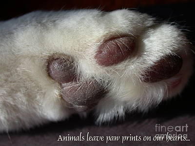 Photograph - Paw Prints by Living Color Photography Lorraine Lynch