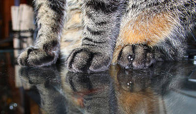 Photograph - Paws by Dart and Suze Humeston