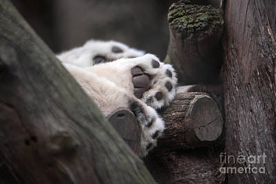 Photograph - Paws For A Nap by Ray Warren