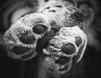 Photograph - Paws For Thought by Chris Boulton