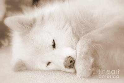 Sweet Dreams Photograph - Pawsome by Fiona Kennard