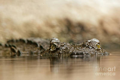 Reptiles Royalty-Free and Rights-Managed Images - Pay attention by Christine Sponchia