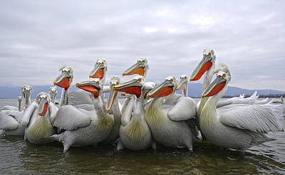 Pelican Wall Art - Photograph - Pay Attention Pleaseeeeeeeee by Julio Lozano Brea