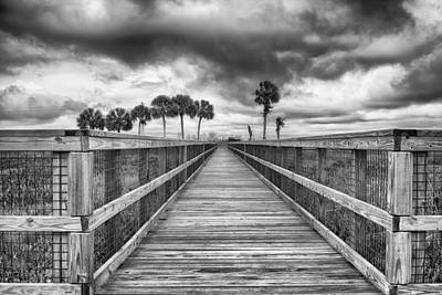 Photograph - Paynes Prairie Preserve State Park by Howard Salmon