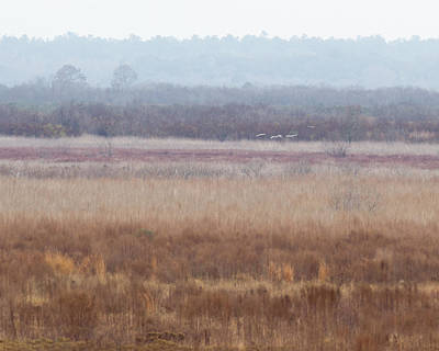 All You Need Is Love - Paynes Prairie White Birds by Paul Rebmann