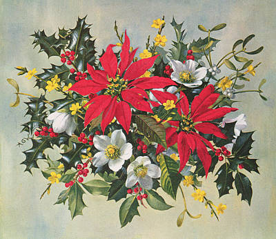 Christmas Flowers Art Print by Albert Williams