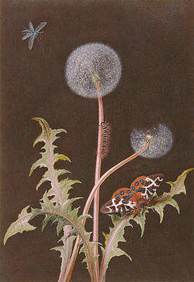 Tortoiseshell Painting - Pd.380-1973 Dandelion With Insects by Margaretha Barbara Dietzsch