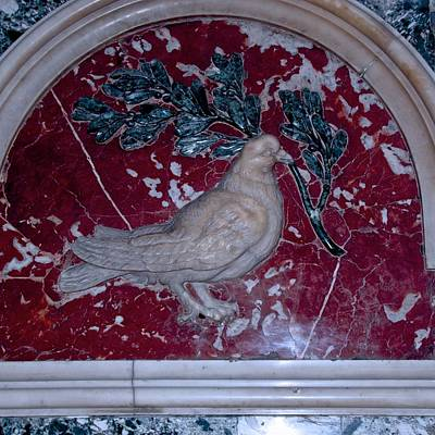 Photograph - Peace Dove by Eric Tressler