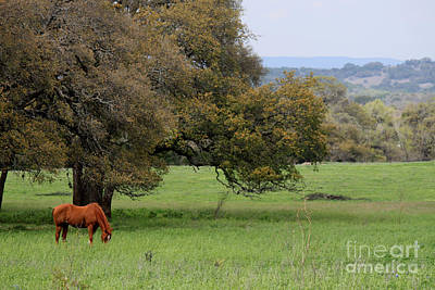 Photograph - Peace In The Hill Country by Diana Black