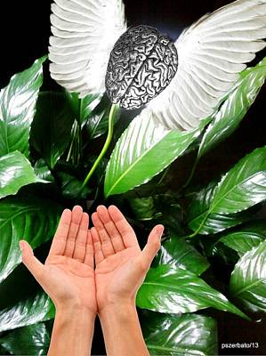 Peace Lily For The Consciousness Original by Paulo Zerbato