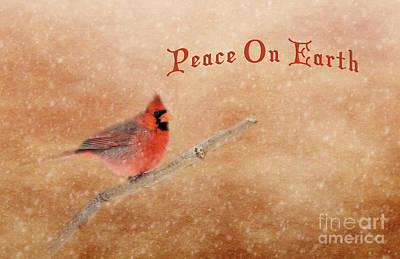 Photograph - Peace On Earth Cardinal by Pam  Holdsworth