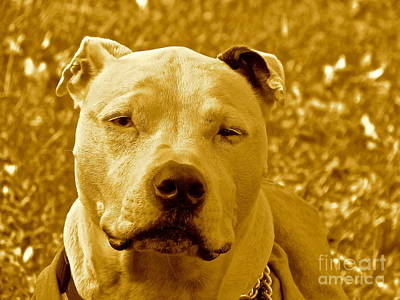 Peace To End Dog Fighting Art Print by Q's House of Art ArtandFinePhotography