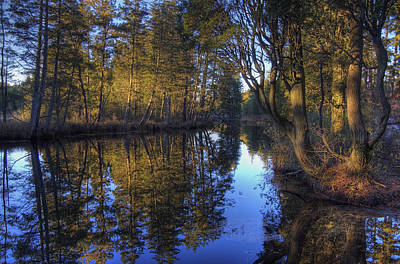 Photograph - Peaceful Cedar by Greg Vizzi