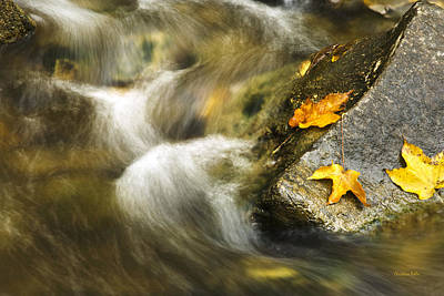 Photograph - Peaceful Creek by Christina Rollo