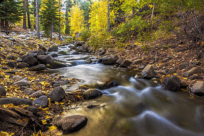 Photograph - Peaceful Creek by Maria Coulson