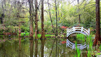 Photograph - Peaceful Cypress Pond by Carol Groenen