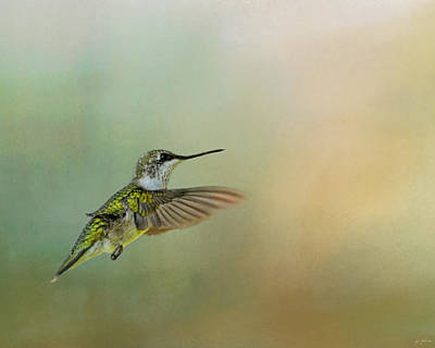 Photograph - Peaceful Day With A Hummingbird by Jai Johnson