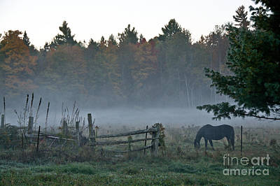 Photograph - Peaceful Farm Scene by Cheryl Baxter