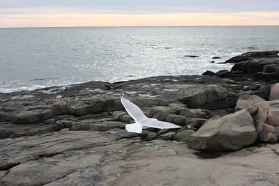 Photograph - Peaceful Flight  by Kimber  Butler