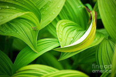 Peaceful Green Art Print by Cynthia Lagoudakis