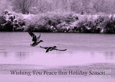 Photograph - Peaceful Holidays Card - Winter Ducks by Carol Groenen
