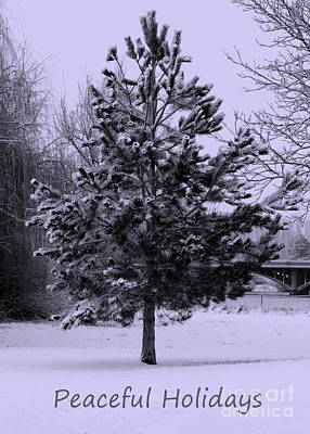 Photograph - Peaceful Holidays by Carol Groenen