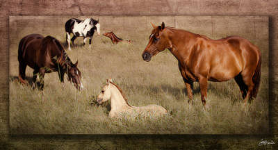 Barnyard Digital Art - Peaceful Moment Captured by Jacque The Muse Photography