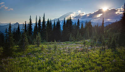Peaceful Mountain Flowers Print by Mike Reid