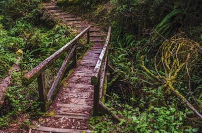 Photograph - Peaceful Path by Loree Johnson
