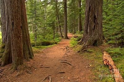 Photograph - Peaceful Path To Cheakamus Lake by Adam Jewell