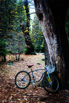 Photograph - Peaceful Pedals by Lynn Bauer