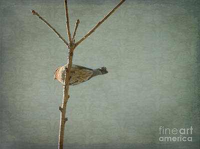 Photograph - Peaceful Perch by Meghan at FireBonnet Art