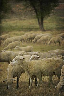 Grateful Dead - Peaceful sheep by Amy Medina