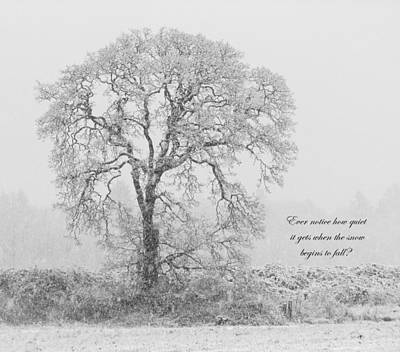 Photograph - Peaceful Snowfall by Angie Vogel