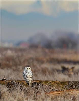 Photograph - Peaceful Solitude by Daniel Behm