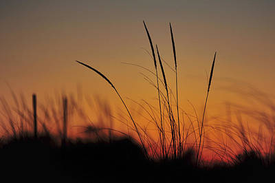Photograph - Peaceful Sunset by Terry DeLuco