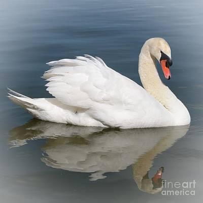 Animal Paintings David Stribbling - Peaceful Swan by Carol Groenen