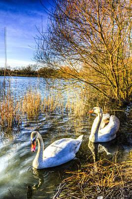 Swan Pair Photograph - Peaceful Swans by David Pyatt