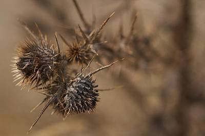 Photograph - Thistle Balls by Scott Holmes