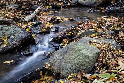Photograph - Peaceful Woodland Stream by Andrew Pacheco
