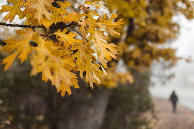 Fall Leaves Photograph - Peacefull Fall Walk by Scott Campbell