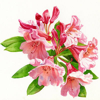 Peach Colors Painting - Peach And Pink Rhododendron by Sharon Freeman