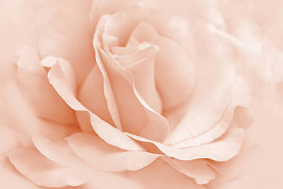 Photograph - Peach Ballerina Rose Flower by Jennie Marie Schell