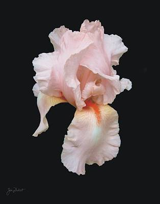 Photograph - Peach Bearded Iris by Joe Duket