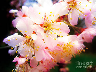 Photograph - Pale Peach Blossom by Nina Ficur Feenan