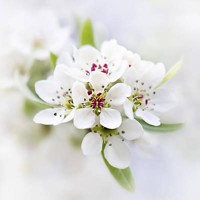Photograph - Peach Blossom by Sarah-fiona Helme